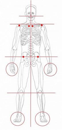 Body alignment anterior view